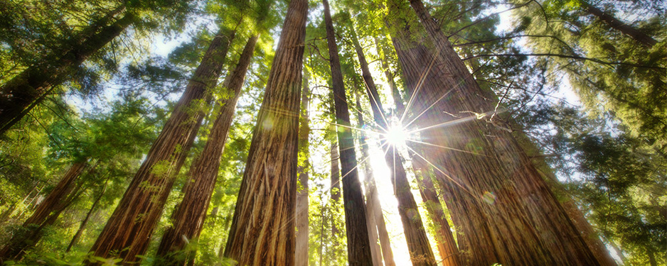 Muir-Woods-Tours-Tree-NorCal-Destinations-Guided-Tours-San-Francisco-California-Wine-County-Napa-Muir-Woods-Monterey-Yosemite-Groups1