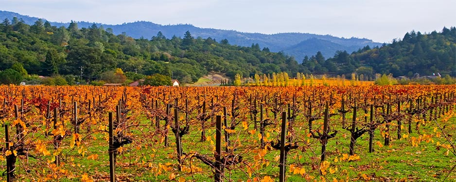 Napa-Valley-Sonoma-Wine-Country-Tour-2-NorCal-Destinations-Guided-Tours-San-Francisco-California-Wine-County-Napa-Muir-Woods-Monterey-Yosemite-Groups